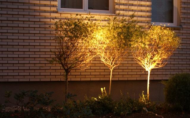 Oświetlenie drzew