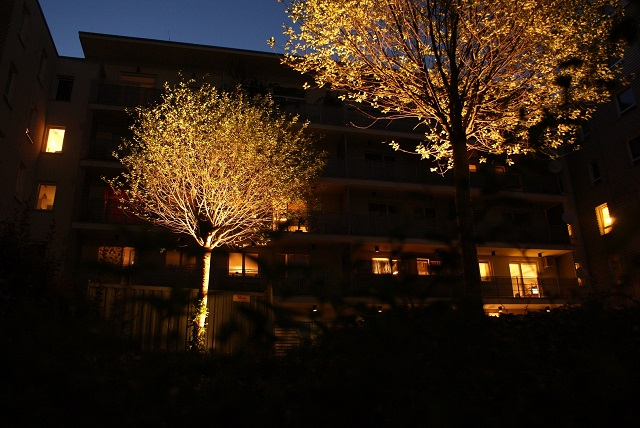 Oświetlenie drzewa